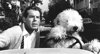 Image result for the shaggy dog 1959